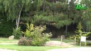 Le Jardin du Marais.flv