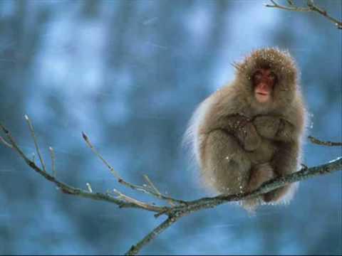 Dave Matthews - Proudest Monkey - crash (audio)