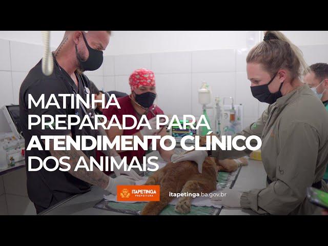 Matinha preparada para atendimento clínico dos animais