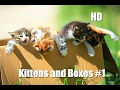 Kittens and Boxes #1 - Funny Cats Compilation 2017