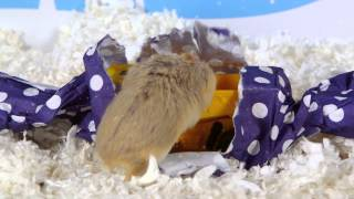 Day 4: A Present for Dumptruck - Cute Hamsters: 12 Days of Christmas