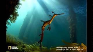 不思議・奇妙な海の生き物。オーストラリアのウィーディ・シードラゴン