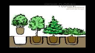 видео Ландшафтный дизайн, посадка, уход и озеленение