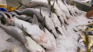 Selling Gray Sharks at Waterfront Fish Market in Dubai 21.07.2017 بيع سمك القرش الرمادي في دبي