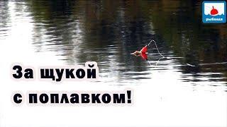 За щукой с поплавком! Необычная для меня рыбалка!