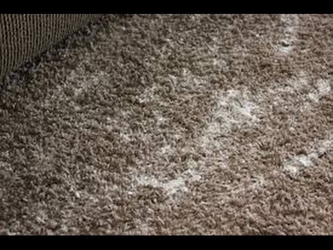 How To Get Smell Out Of Carpet >> How To Get Smell Out Of Carpet Youtube