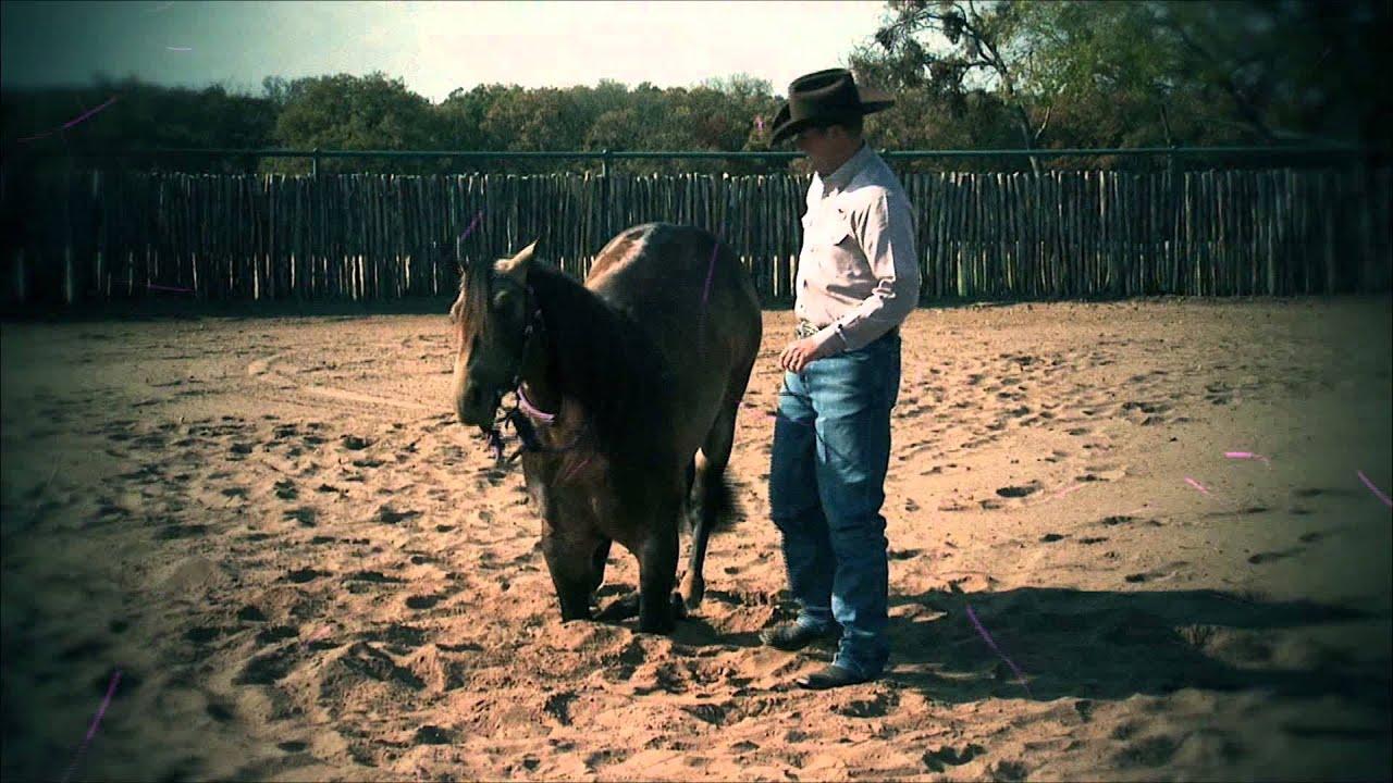 Clinton Anderson: Foal Training - Downunder Horsemanship ...