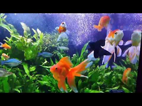 Super filtration in GoldFish Tank! Installing Fluval FX6 Number 4, Unboxing Fish and more!