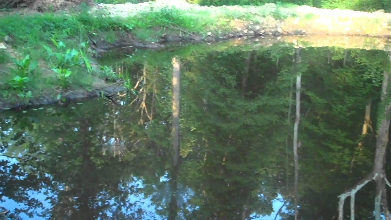 Wetland plants for sale at Tn Tree Nursery Online - YouTube