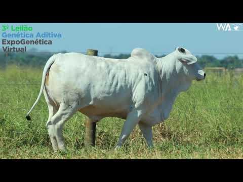 LOTE 23 - REM 10371 - 3º Leilão Genética Aditiva Expogenética 2020