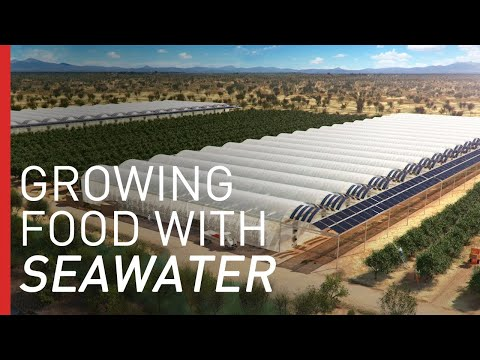 Growing Crops In The Desert With Seawater | Freethink