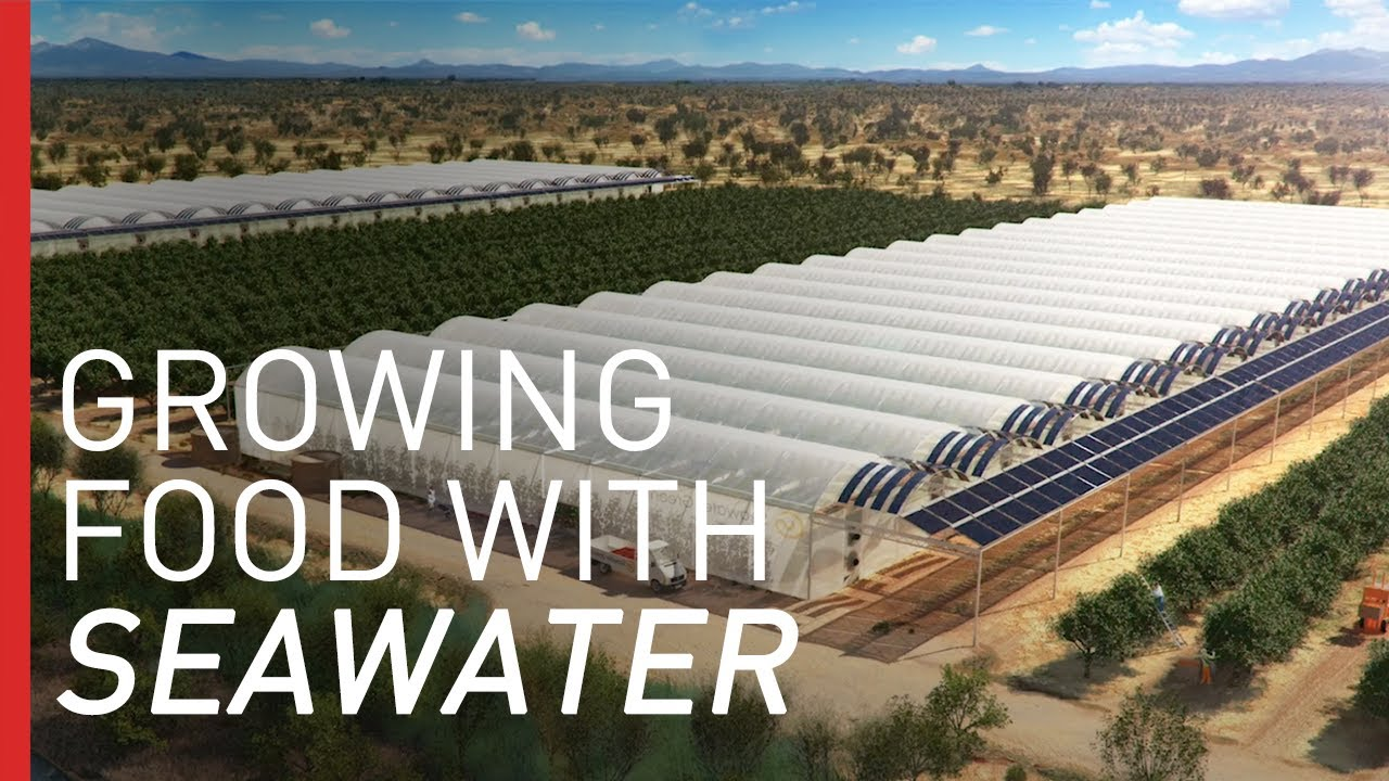 Growing Crops In The Desert With Seawater Freethink Youtube
