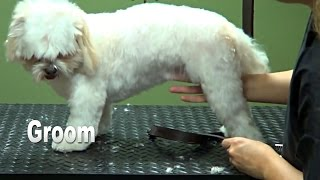 How To Groom A Shih Tzu (puppy Cut) - Do-it-yourself Dog Grooming