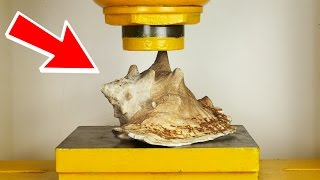 GIANT SEA SHELL  VS  100 Tonn  HYDRAULIC PRESS - THE SMASHER SHOW