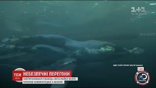 Олімпійський чемпіон з плавання Майкл Фелпс позмагався з білою акулою