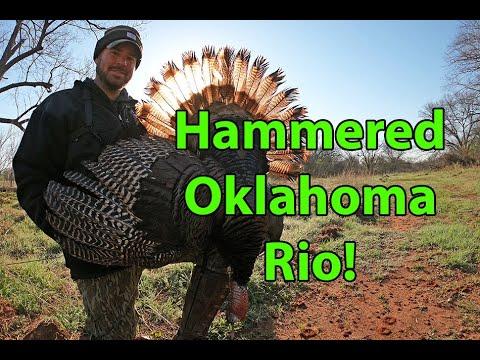 Hard Gobbling Oklahoma Turkey