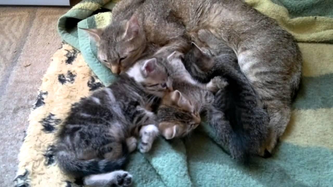 Nokia N800 Babykatzen mit ihrer Mama am kuscheln