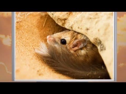 Животные пустыни. В мире животных - От слона до муравья (Выпуск 40)