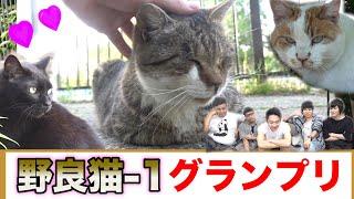 【第1回】野良猫-1グランプリが可愛すぎるのでゆっくり見てってね!!