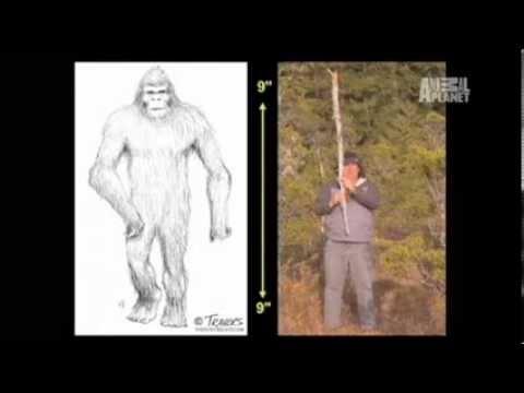 I Saw Bigfoot | Finding Bigfoot