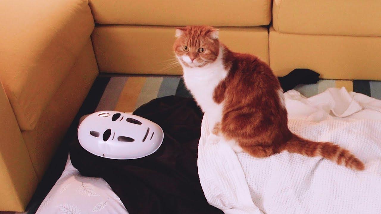 가오나시가-고양이-옆에서-자다가-가위눌리다