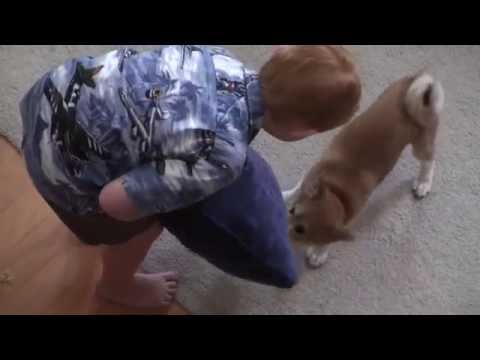 Baby Milo Plays Tug | Throwback Puppy Thursday
