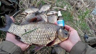 Они сгибают удочку в дугу Крупный Карась на масло Рыбалка 2018