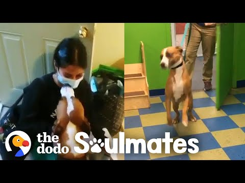 Dog Does Zoomies Every Time His Doctor Mom Gets Home | The Dodo Soulmates
