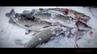 Клип на тему Ловим щуку зимой в Вологодской области