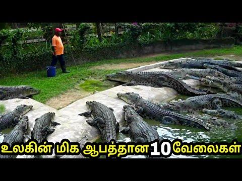 உலகின் மிக ஆபத்தான 10 வேலைகள் | 10 unusual jobs around the world | Tamil