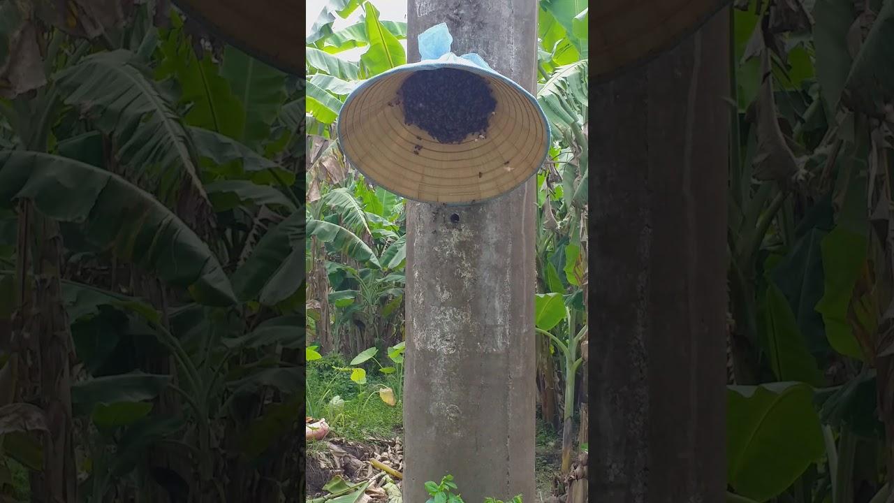 Bắt ong trong chụ điện đơn giản và hiệu quả
