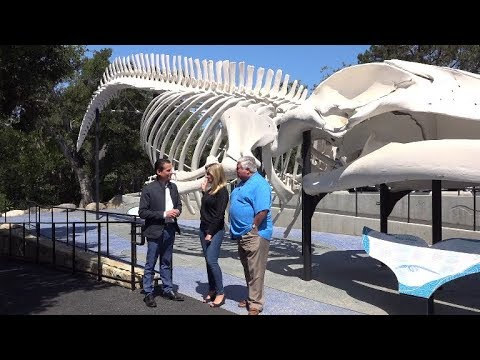 Behind the Scenes S01 E04 featuring Santa Barbara Museum of Natural History