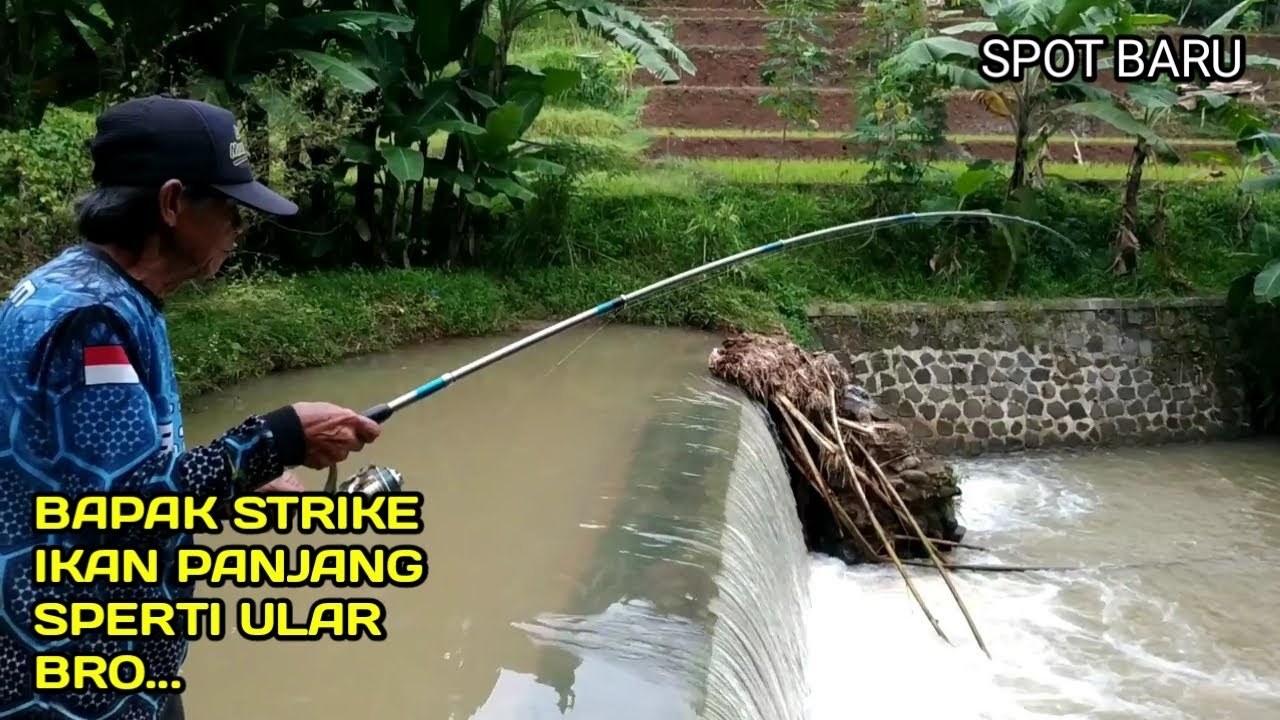 Bapak Mancing Strike Ikan Sidat dan Lele bikin heboh bro..