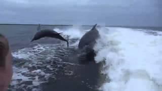 イルカがイルカにタックル