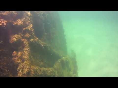 Snorkeling Breckenshire Wreck In Vero Beach