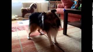 Canine Rehabilitation - Physiodog.cz