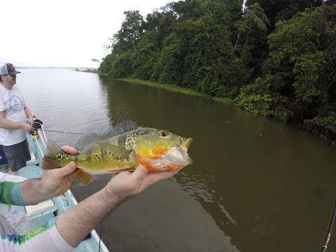 Peacock Bass Fishing In Lake Gatun, Panama