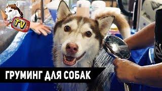 ХАСКИ В ГРУМИНГ САЛОНЕ (The Pet Corner)