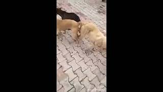 New Funny three Dogs  Meeting in road   chautare channel 2019