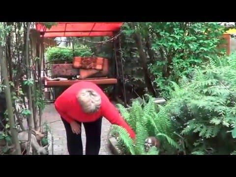 Папоротник. Страусник Большой. Что Посадить  Под Кроной Садовых Деревьев