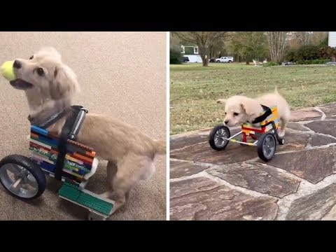 Tony Sandoval on The Breeze - Puppy Without Front Legs Gets Lego Wheelchair