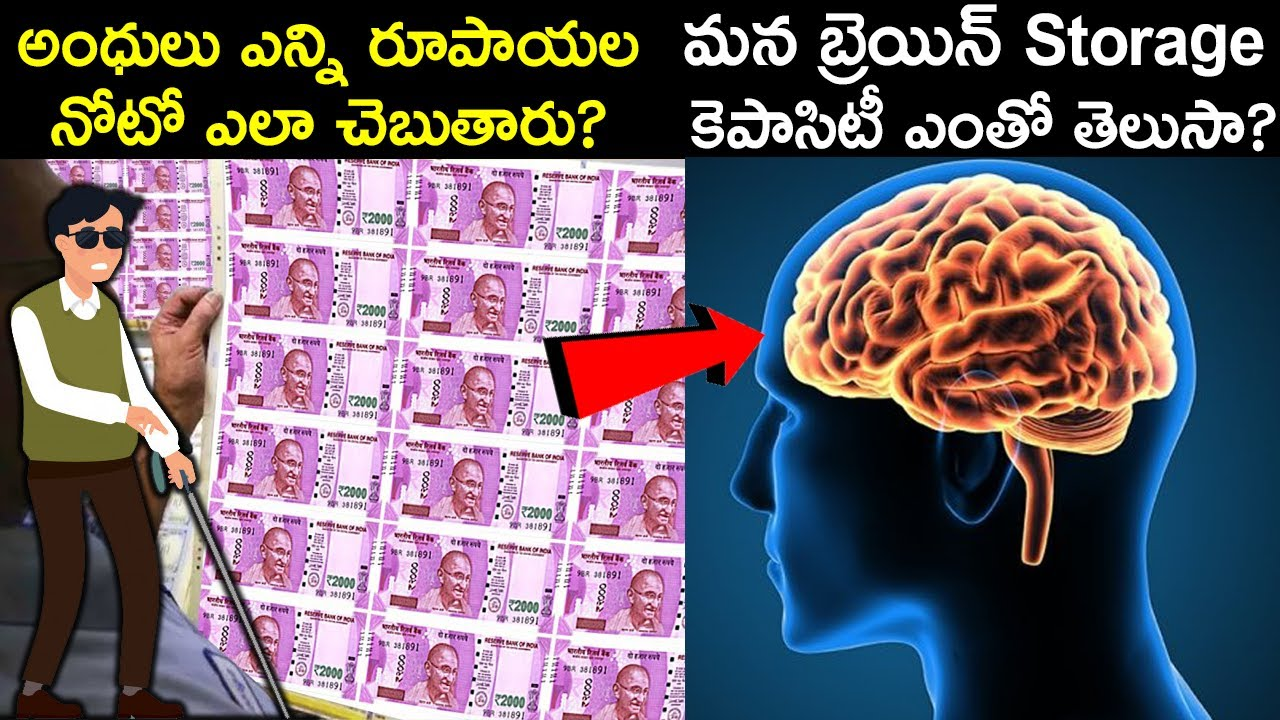 Top 10 Interesting & Unknown Facts in Telugu | Facts You Don't Know |  Telugu Brain