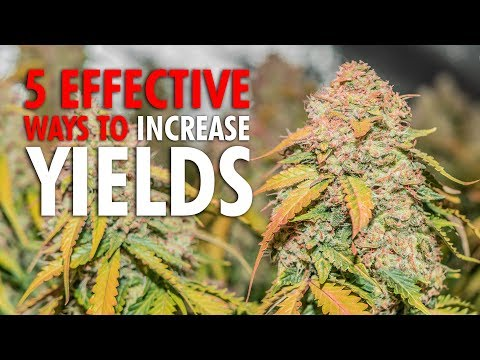 5 Effective Ways to Increase Plant Yields