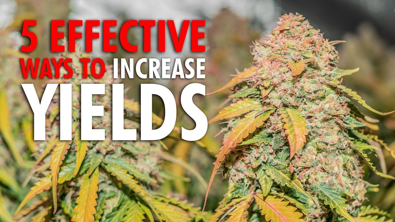 Download 5 Effective Ways to Increase Plant Yields