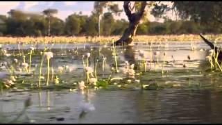 Australiens Riesen Krokodile Dokumentation über Krokodile in Australien Teil 1