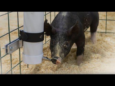 Sturdy, Lightweight PVC Pig Waterer
