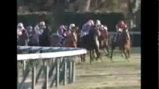 2013.12.22 Arima Kinen (The Grand Prix) - Orfevre