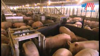 U.S. Pork - Sustainable Pork Production