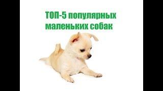 ТОП-5 Популярных Маленьких Собак & Карликовые Собаки.Ветклиника Био-Вет