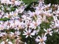 【北海道大学植物園 】散策♪♪♪ の動画、YouTube動画。